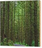 Road Through The Woods Wood Print