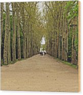 Road To Chenonceau Wood Print