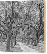 Road To Dungness Wood Print
