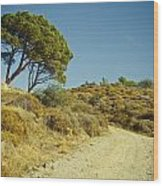 Road With Olive Trees Wood Print