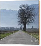 Road With Trees Wood Print