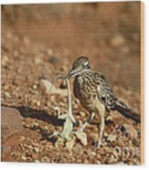 Roadrunner With Lizard Wood Print
