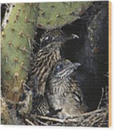 Roadrunners In Nest Wood Print