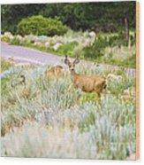 Roadside Buck Wood Print