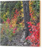 Roadside Fall Colors Wood Print