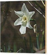 Roadside White Narcissus Wood Print