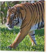 Roaming Tiger Wood Print