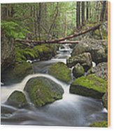 Roaring Brook Wood Print by Patrick Downey