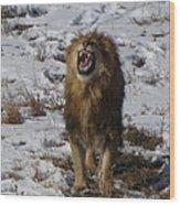 Roaring Lion Wood Print
