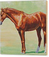 Roasting Chestnut - Morgan Horse Wood Print