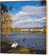 Roath Park Lake Wood Print