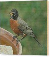 Robin 1 Wood Print