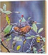 Robin And Berries Wood Print