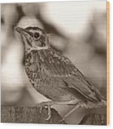 Robin Bird Black And White Wood Print