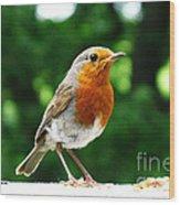 Robin Bird Photograph Wood Print