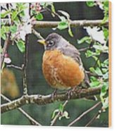 Robin In Apple Tree Wood Print