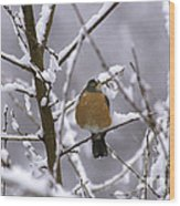 Robin In Snow Wood Print