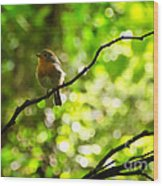 Robin In The Glade Wood Print