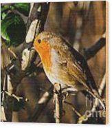 Robin In The Hedgerow Wood Print