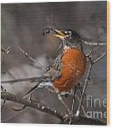 Robin Pictures 100 Wood Print