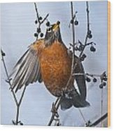 Robin Pictures 84 Wood Print