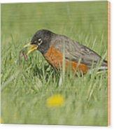 Robin Vs Worm Wood Print