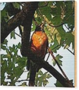 Robin Waiting Wood Print
