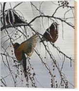 Robins Cold Breakfast Wood Print by Rebecca Adams