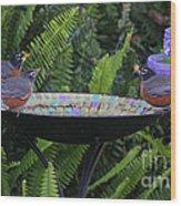 Robins In Bird Bath Wood Print