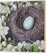 Robin's Nest Wood Print