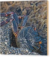 Rock Crab At He'eia Kea Pier Wood Print