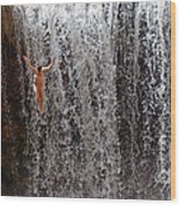 Rock Falls Wood Print