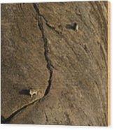 Rock Hydrax   #1087 Wood Print