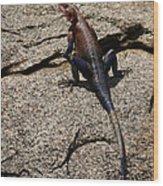 Rock Island Lizard   #8103 Wood Print