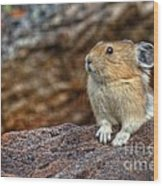 Rock Rabbit Wood Print