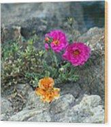 Rock Rose Wood Print by Corina Bishop