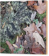 Rock Running Cedar Leaves And Lichen  Natural Abstract Wood Print