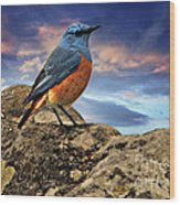 Rock Thrush Wood Print