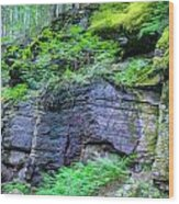 Rock Wall Trail Of The Cedars Glacier National Park Painted Wood Print