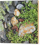 Rocks And Lichen Wood Print