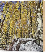 Rocky Aspen Wood Print