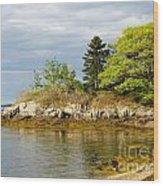 Rocky Coast In Maine Wood Print