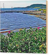 Rocky Harbour Roses-nl Wood Print