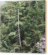 Mountain - Landscape - Trees - Rocky Hillside Wood Print