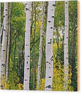 Rocky Mountain Aspen Forest Wood Print