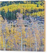 Rocky Mountain Autumn Contrast Wood Print by James BO  Insogna