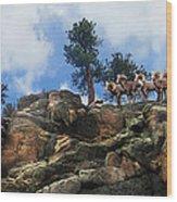 Rocky Mountain Big Horn Herd Wood Print by Ric Soulen