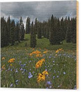 Rocky Mountain Bloom Wood Print