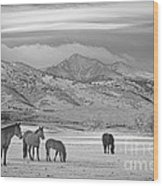 Rocky Mountain Country Morning Bw Wood Print