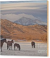 Rocky Mountain Country Morning Wood Print